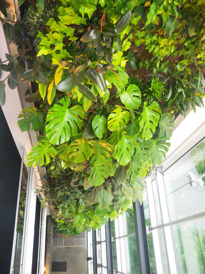 mur-vert-maisond-du-developpement-durable