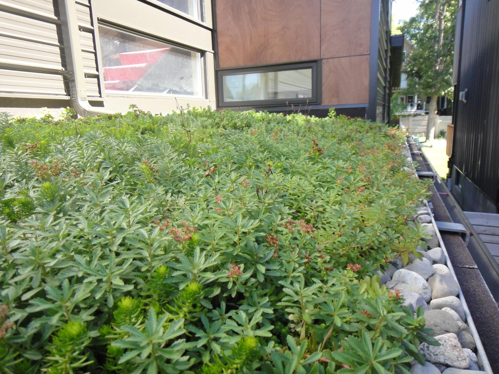 terrasse-ottawa