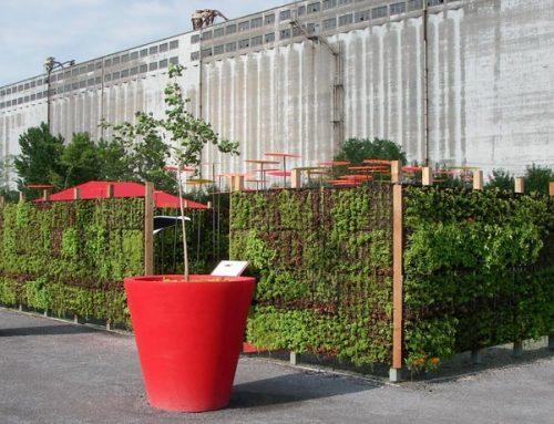 Mur végétal – Flora Montréal