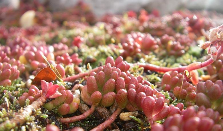 10 bonnes raisons d'adopter les murs végétaux