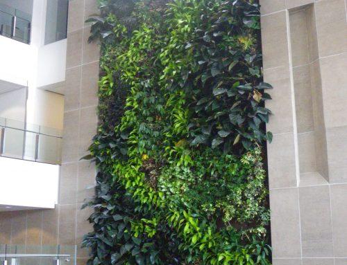 Mur vert et terrasse pour Carleton University Ottawa