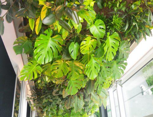 Mur végétal – Maison du développement durable