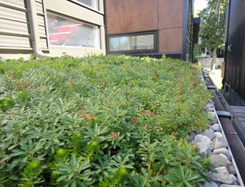 Terrasse végétalisée – Résidence privée à Ottawa